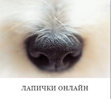 lapichki-online-cinderella-group